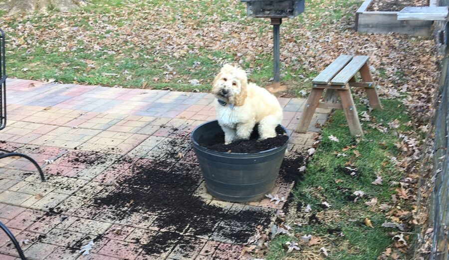 terra cucciolo bianco