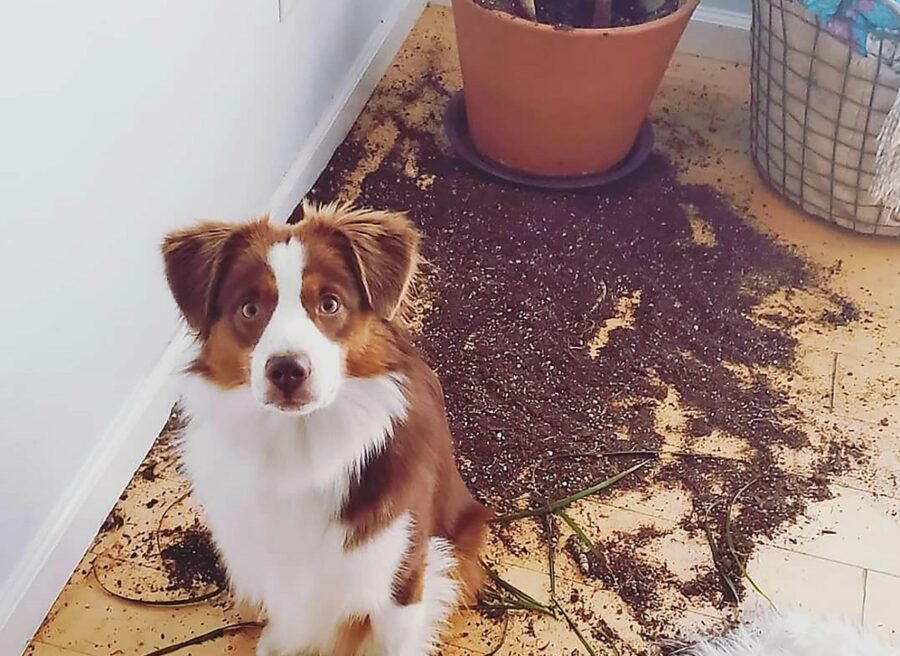 cane pasticcio vaso