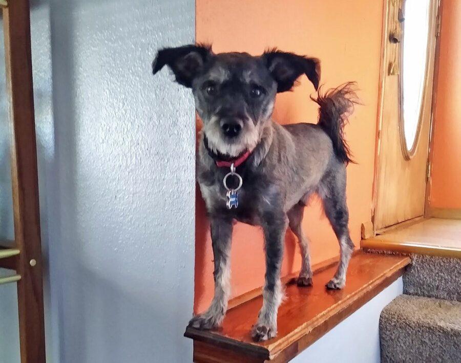scale casa cane