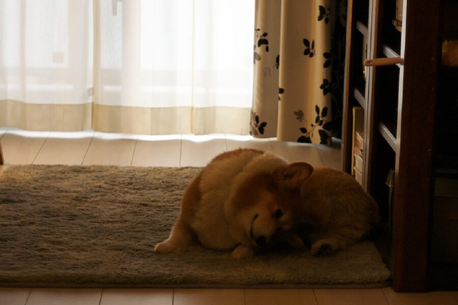 tappeto cane tenero