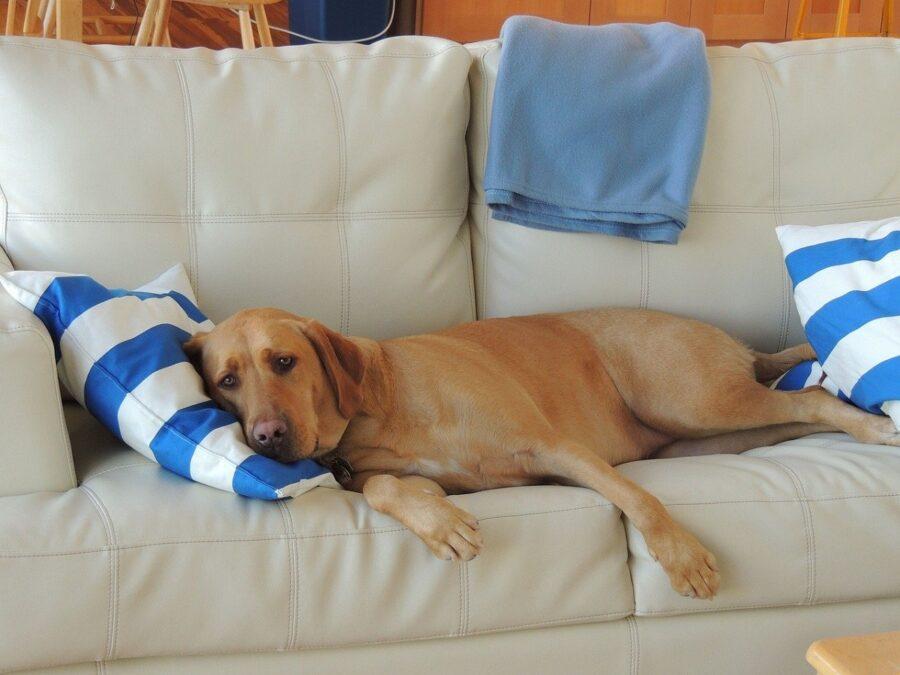 cucciolo divano relax