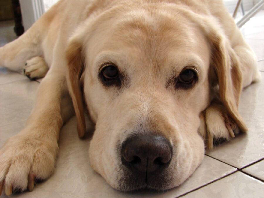 cane pavimento guarda