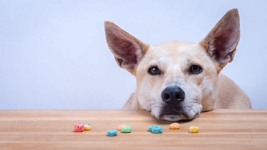 cane cereali tavolo