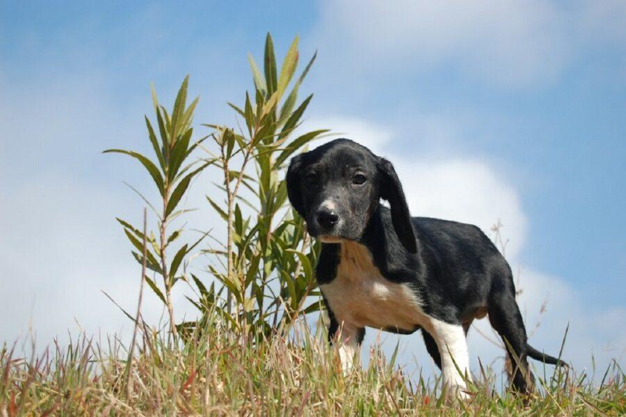 cane erba natura