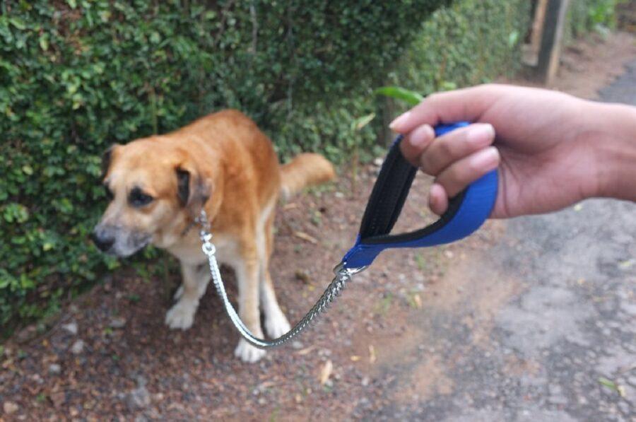 cane guinzaglio pupù