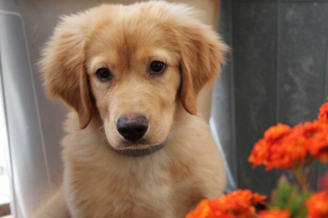 piccolo cagnolino dolce