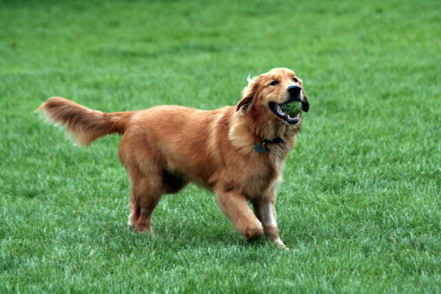cane adorabile pallina