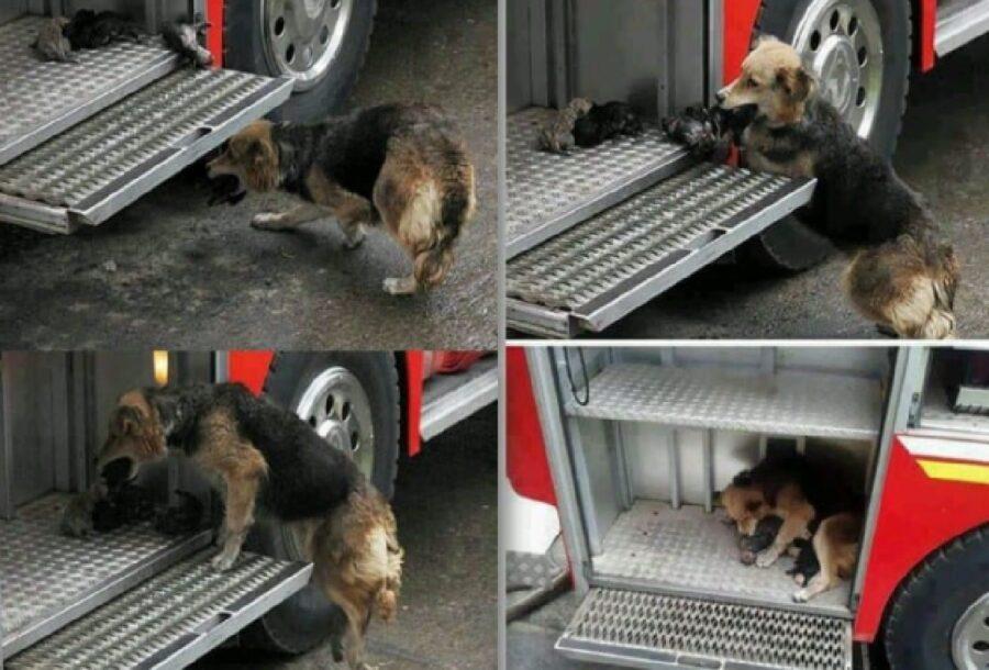 cane salva piccoli