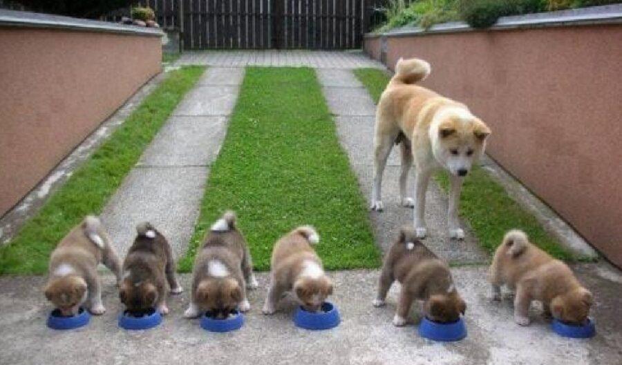cuccioli in fila