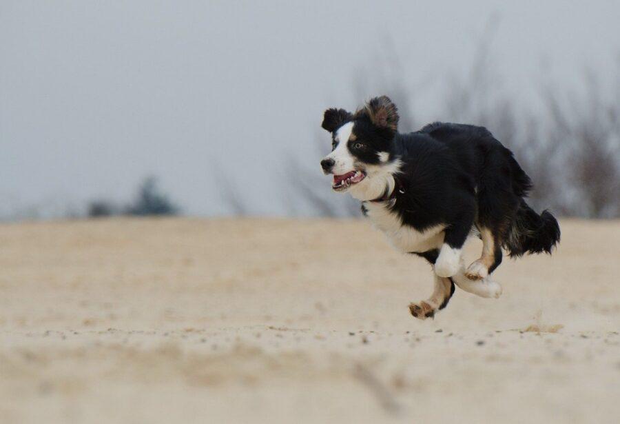 cucciolo correre cane