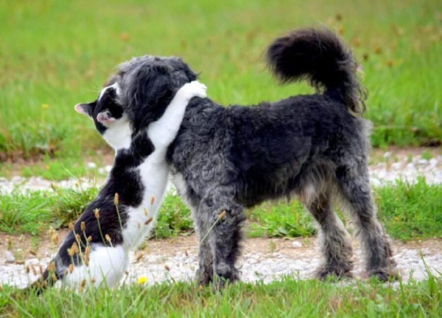 cane e gatto classica amicizia