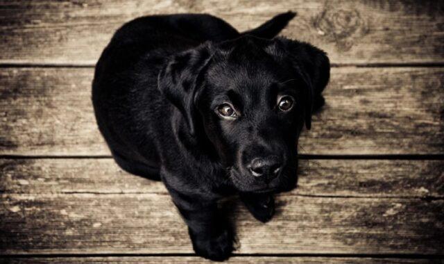 foto che ci fanno comprendere cani speciali