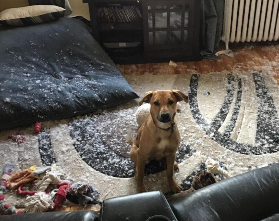 cane pasticcio casa