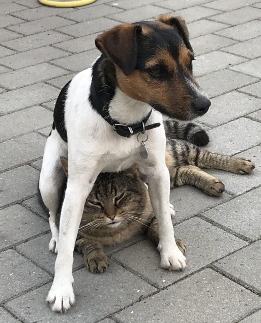 cane gatto amici