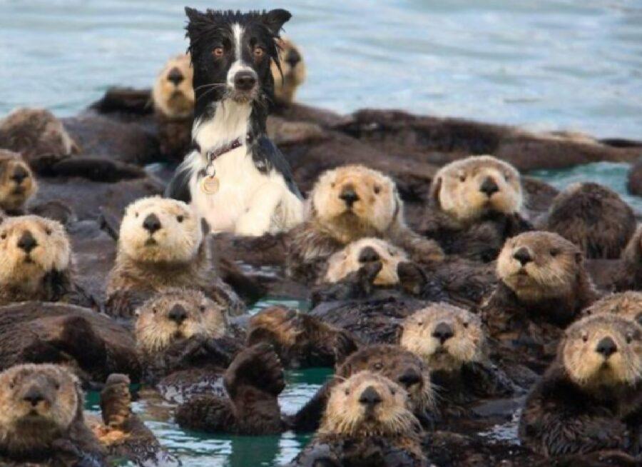 cane foche acqua mare