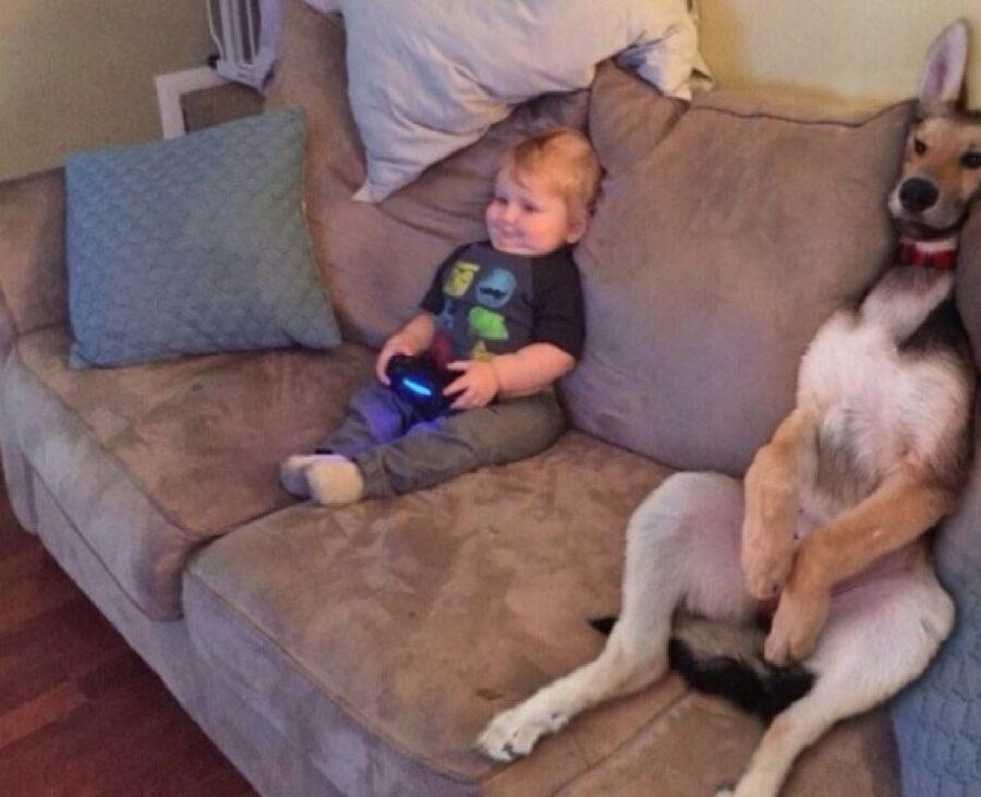 cane gioca con piccolo bambino