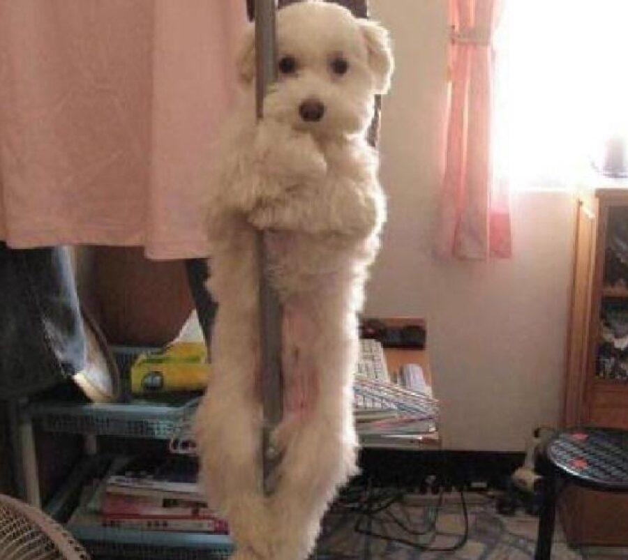 cane bianco scende palo