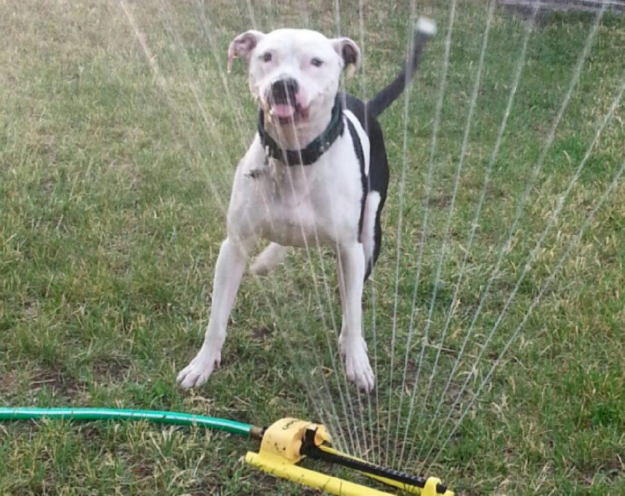 cane irrigatore acqua felice