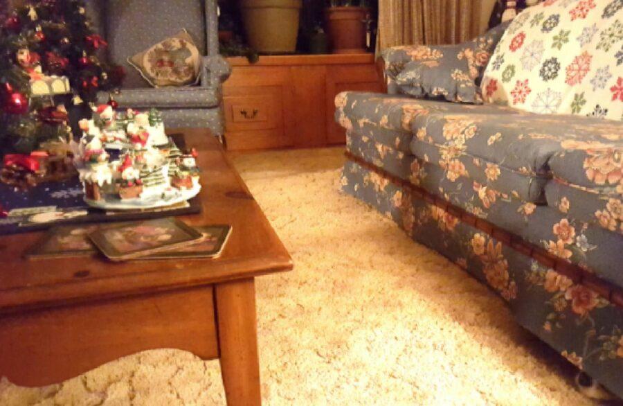 cane nascosto sotto divano blu