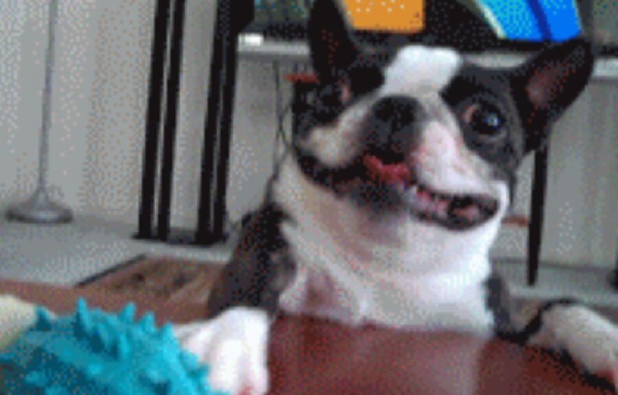 cane faccia incredibile inquietante