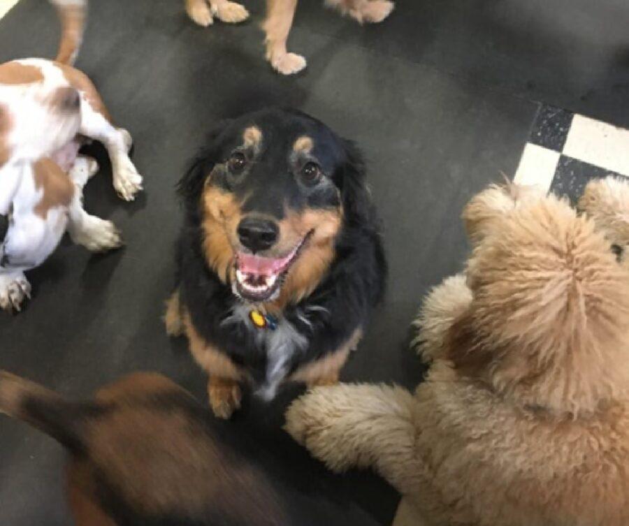 cane felice di giocare