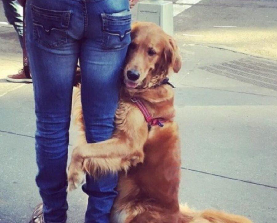 cane abbraccia gamba papà