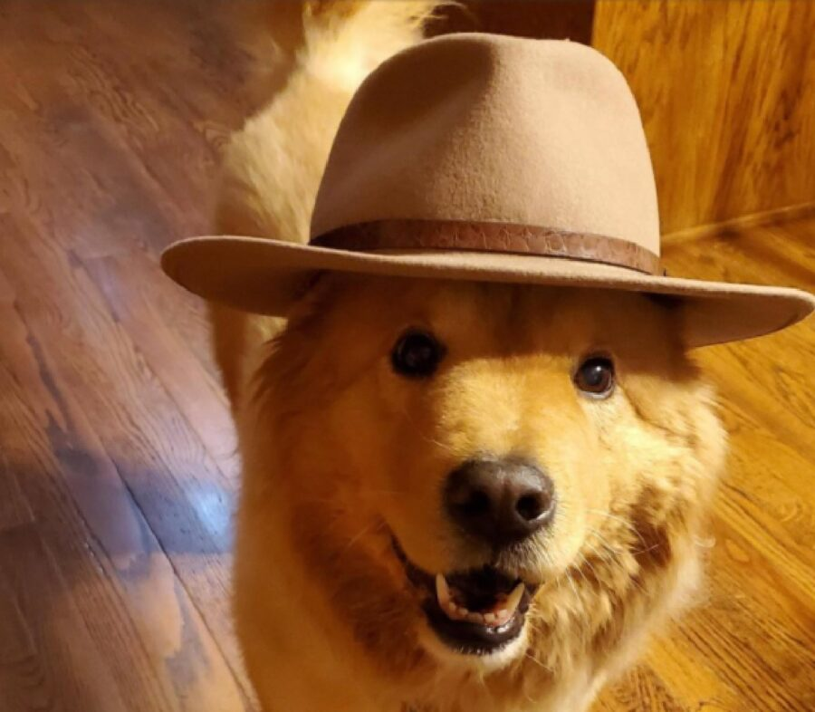 cane pronto per uscire