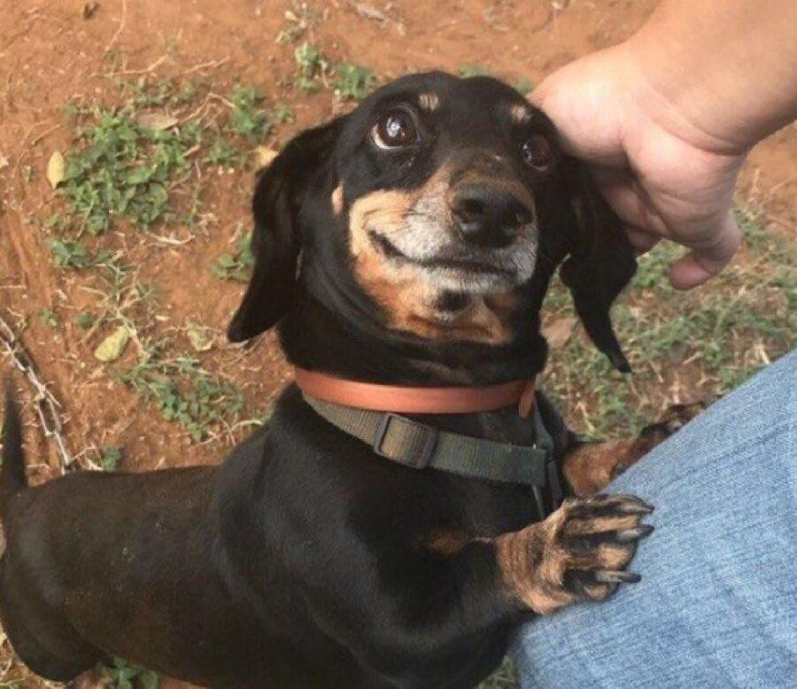 cane occhiata gioiosa mamma