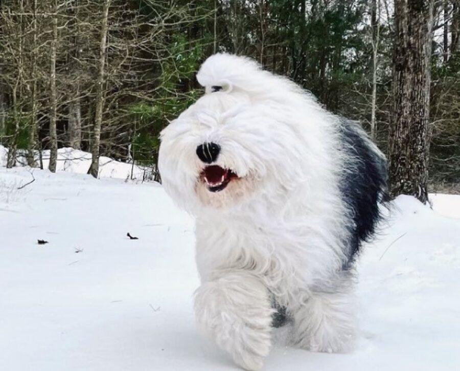 cane buffo bosco innevato
