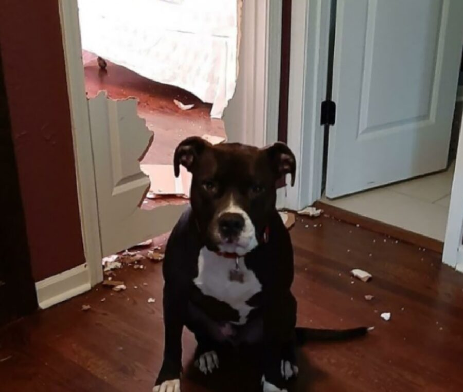 cane nero sfonda porta