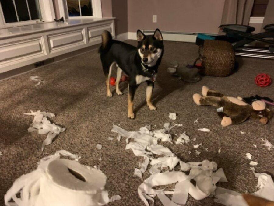 cane pastore carta igienica