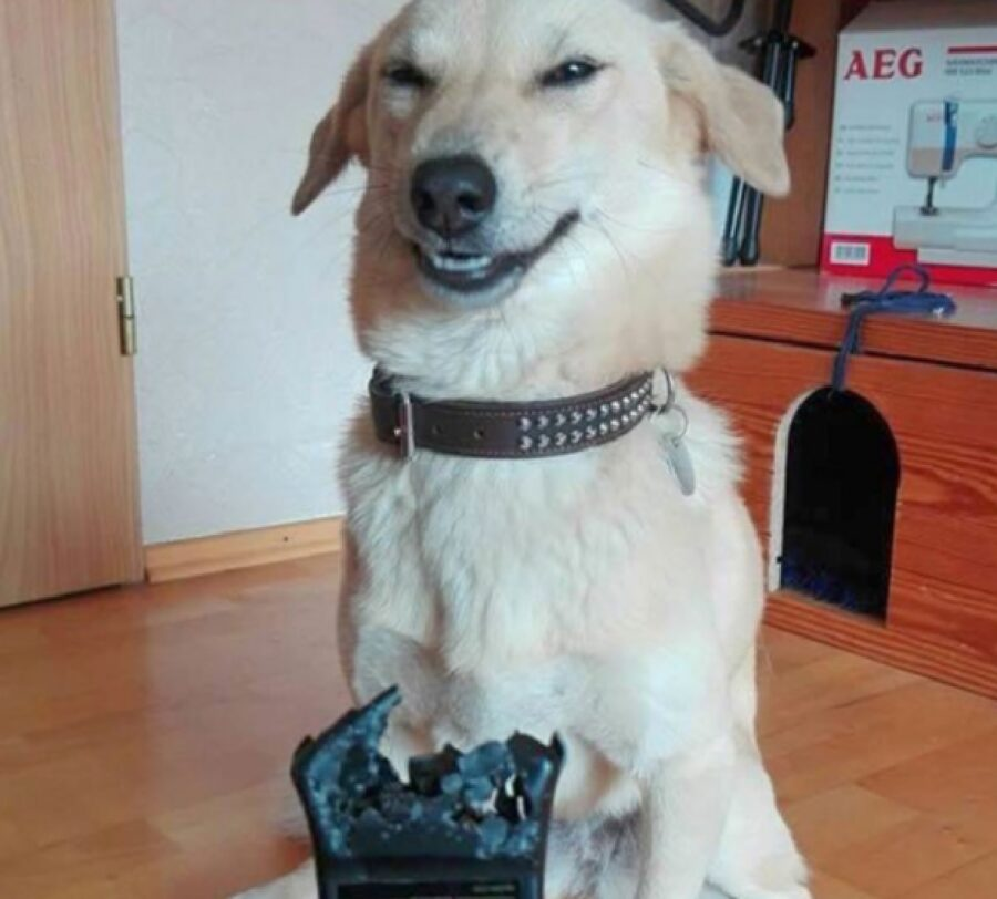 cucciolo mangia telecomando espressione