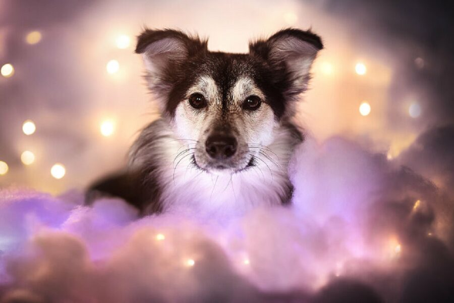 cane nuvole finte