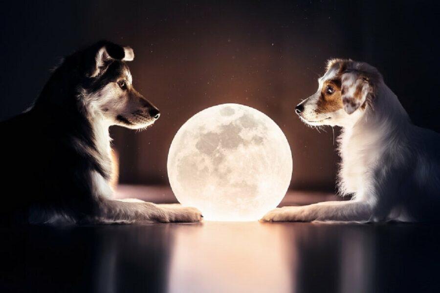 cani luna lampada