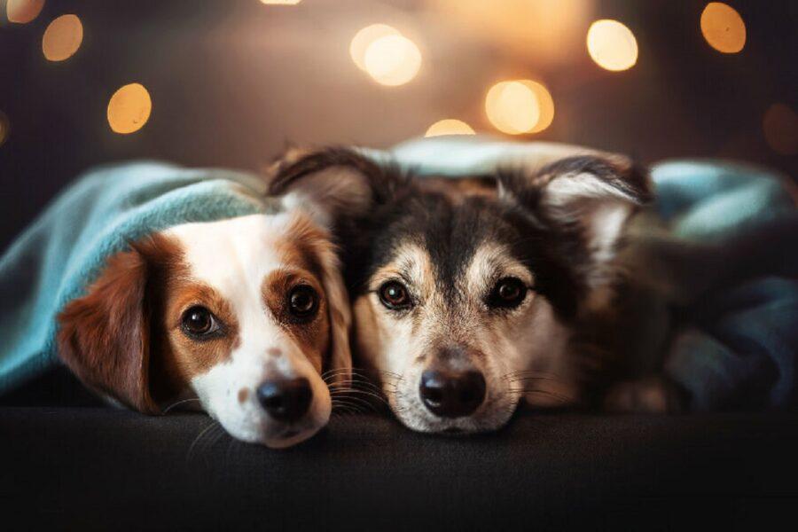 coppia cuccioli coccole