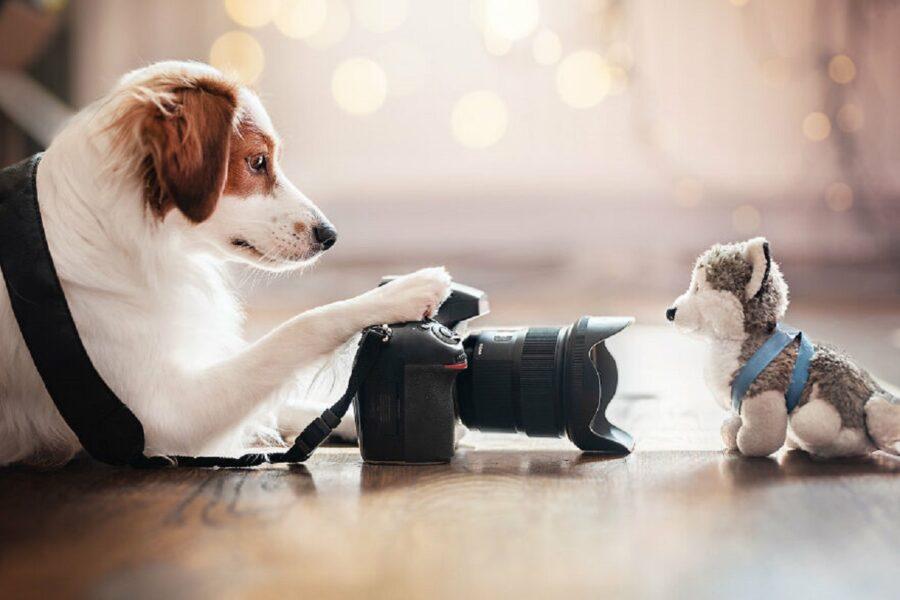 cane scatta foto
