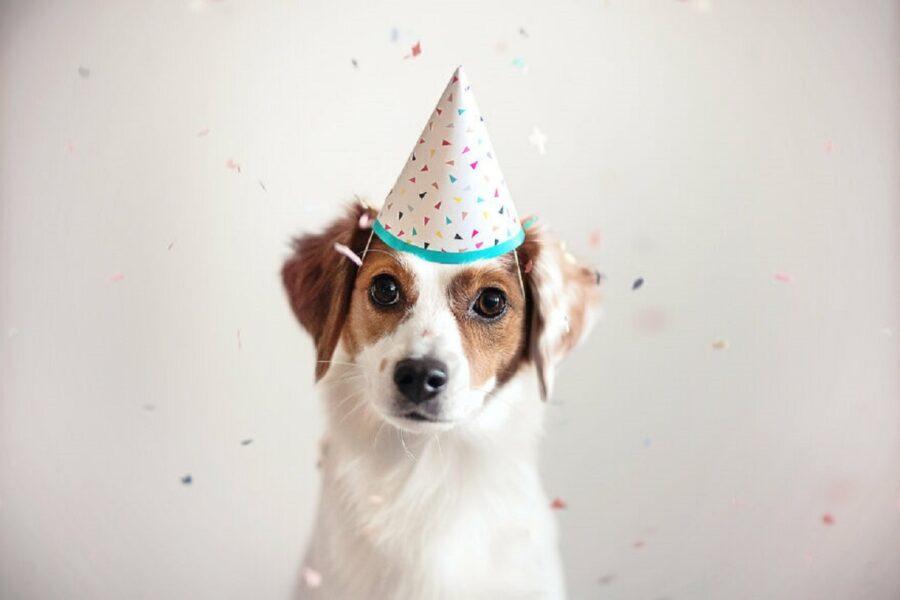 cane festa compleanno