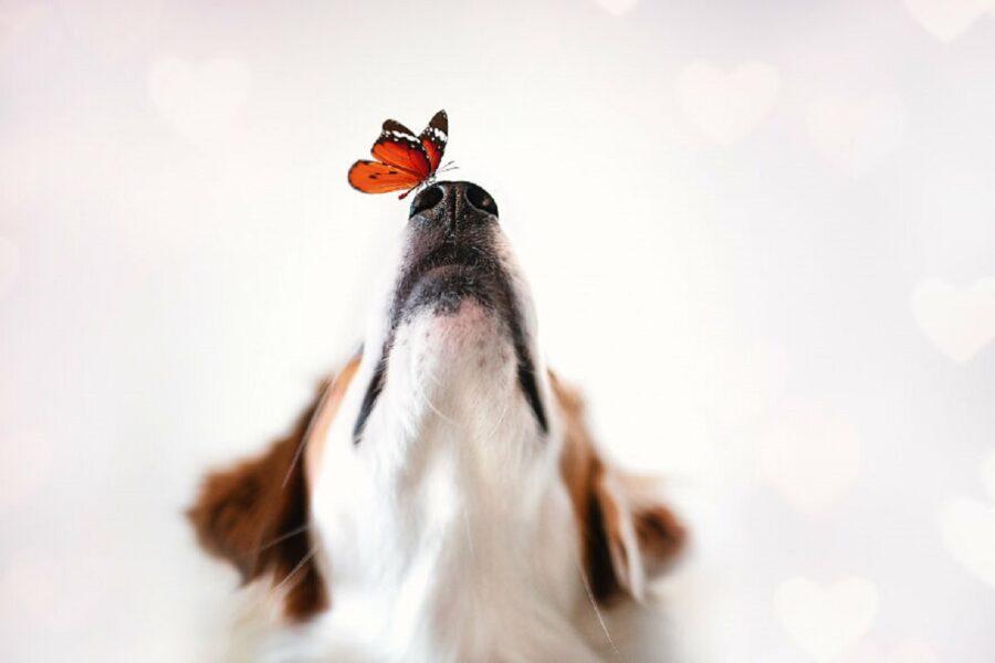cane muso farfalla