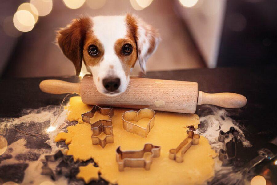 adorabile cane mattarello