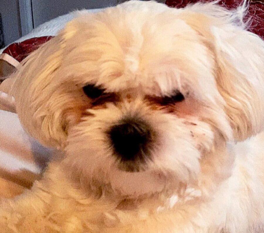 cucciolo dimostra di essere arrabbiato