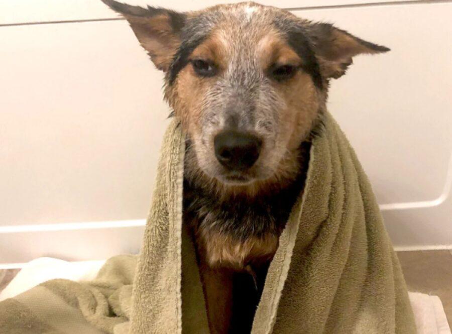 cane bagnato offeso per bagno