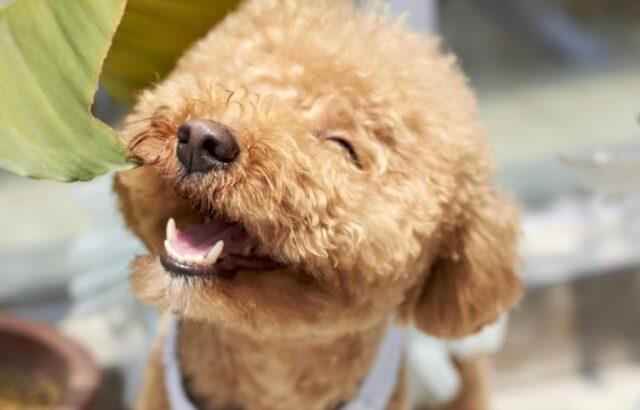 cani che hanno personalità