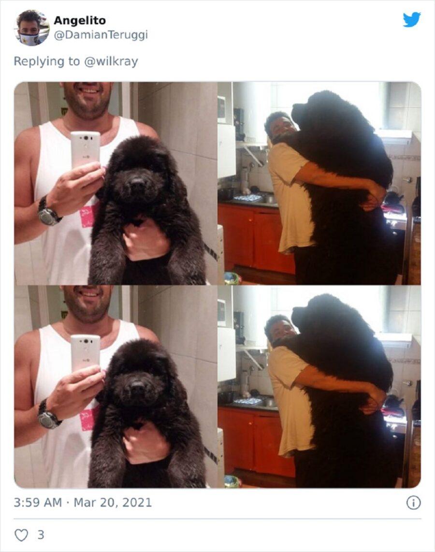 cane nero enorme
