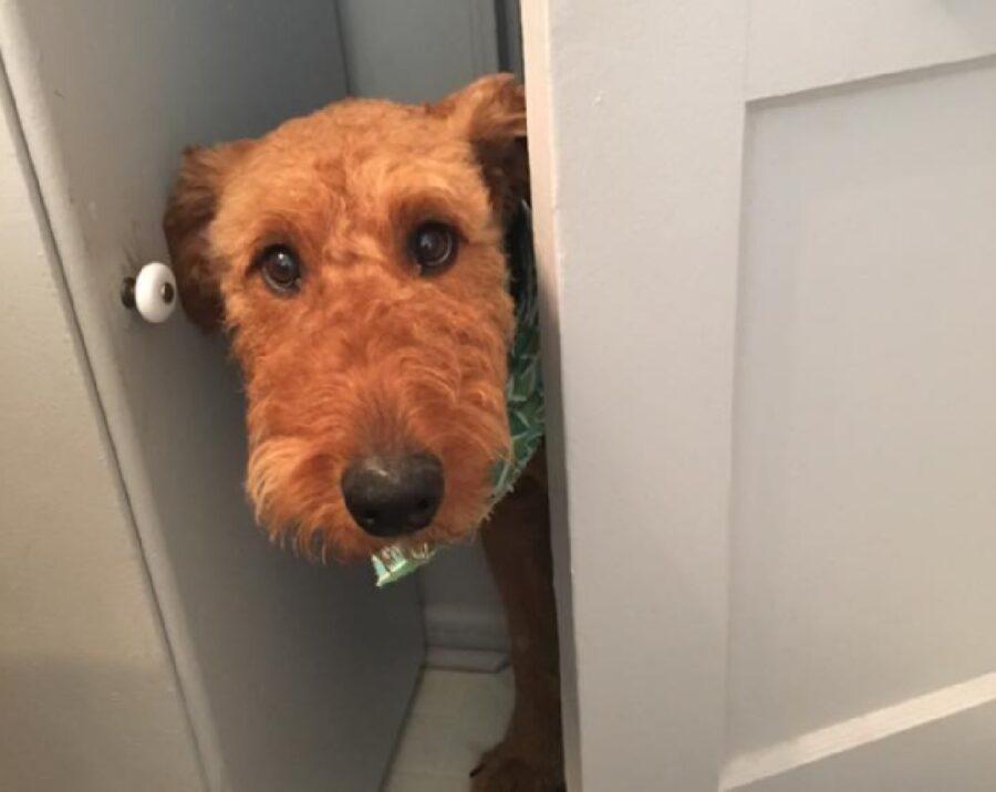 cagnolino muso arancione curioso