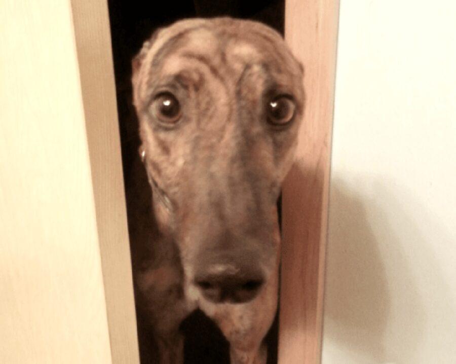 cucciolo con naso lunghissimo porta