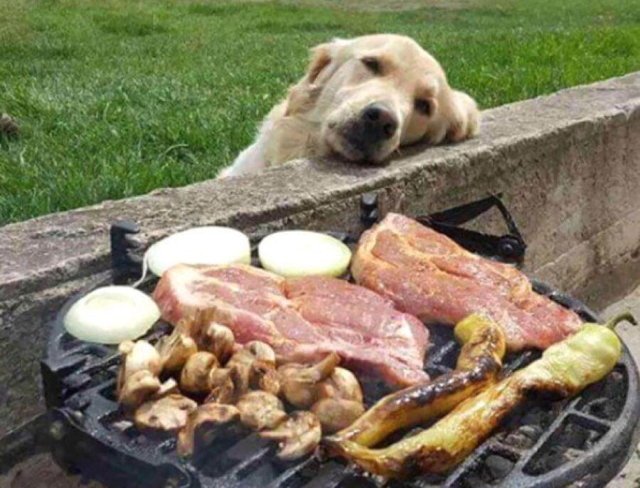 cane pensieroso dietro barbecue