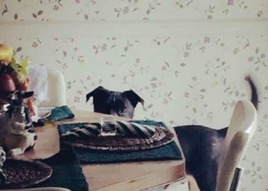 cane si apposta dietro tavola