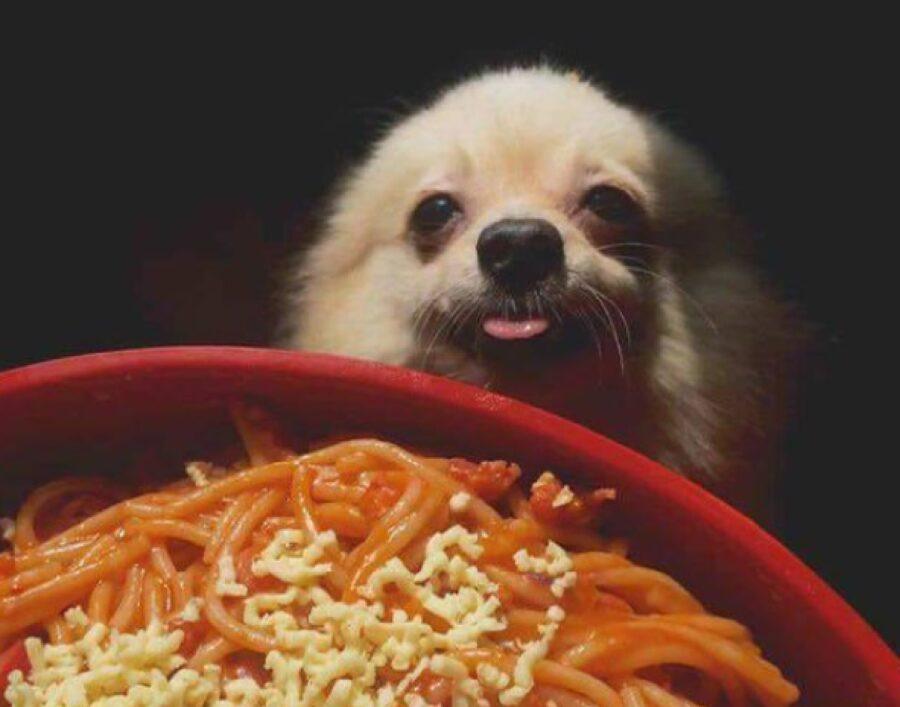 cane piatto di pasta irresistibile