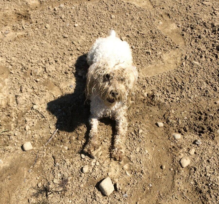 cane pasticcio sporco