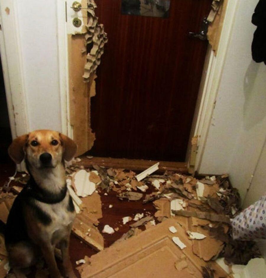 cucciolo cartone distrutto